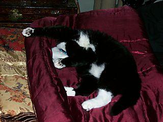 Akasha upside down sleeping