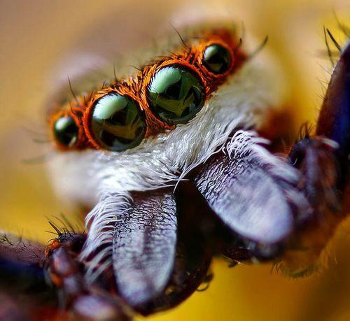 Spider_coy