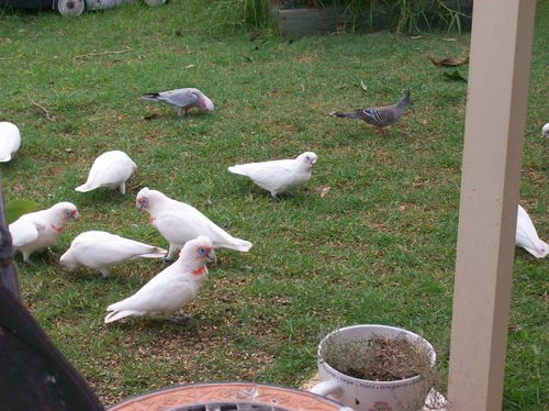 09 03 11Backyard Visitors